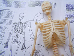 Skeleton on a studious book