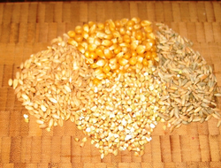 Selenium content of grains varies