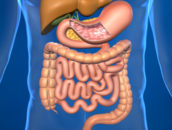 The small intestine is part of the GI tract