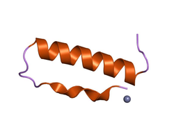 A pancreatic polypeptide hormone