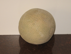 "A ""netted"" cantaloupe"
